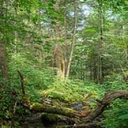 Douglas Falls Trail
