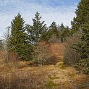 Green Mountain Trail Climbs Fork Ridge