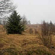 Grassy Bald on Fork Ridge