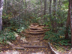 Greybeard Trail