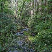 Little Cataloochee Creek