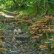 Mushroom Community