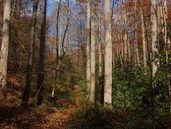 Poundingmill Trail