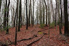 Tom Miller Trail
