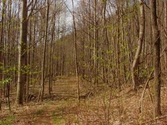 Pilot Cove Trail