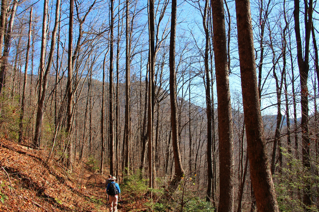 a7a7846f0 Meanderthals   Raven Cliff Falls Trail, Dismal Trail, Naturaland Trust Trail,  Gum Gap Trail, Caesars Head State Park, South Carolina