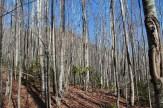 Saplings on Thompson Creek
