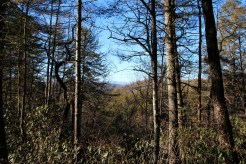 Hill Top Trail