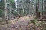 Junction with Buckeye Gap