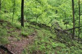Trail debris