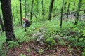 Bushwhacking downhill