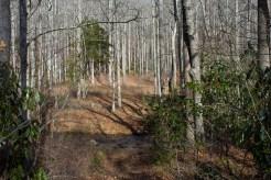 Middle Fork of Fletcher Creek