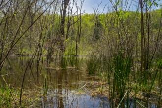 Marshy wetlands