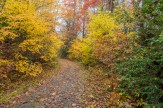 Pathway to Daniel Ridge Falls