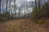 Forest Road 5046