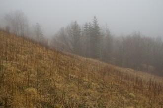 Fork Ridge above the trail