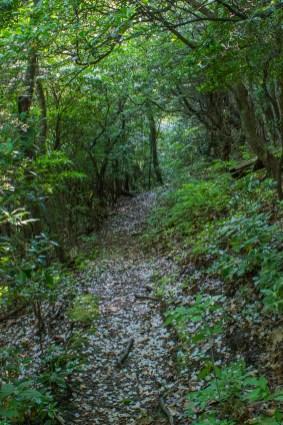 Laurel petals on the trail