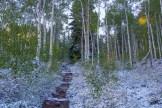 Booth Creek Trail