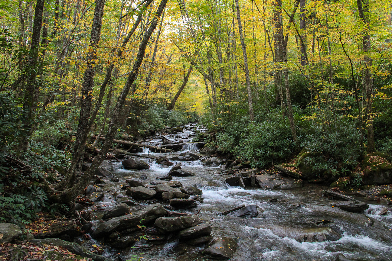 Alum Cave Creek - Photo by Jeff Clark