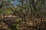 Campsite amid rhododendron