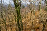 Forest in recovery from fire