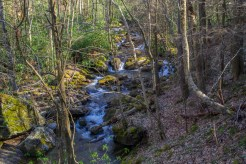 Little East Fork of Pigeon River