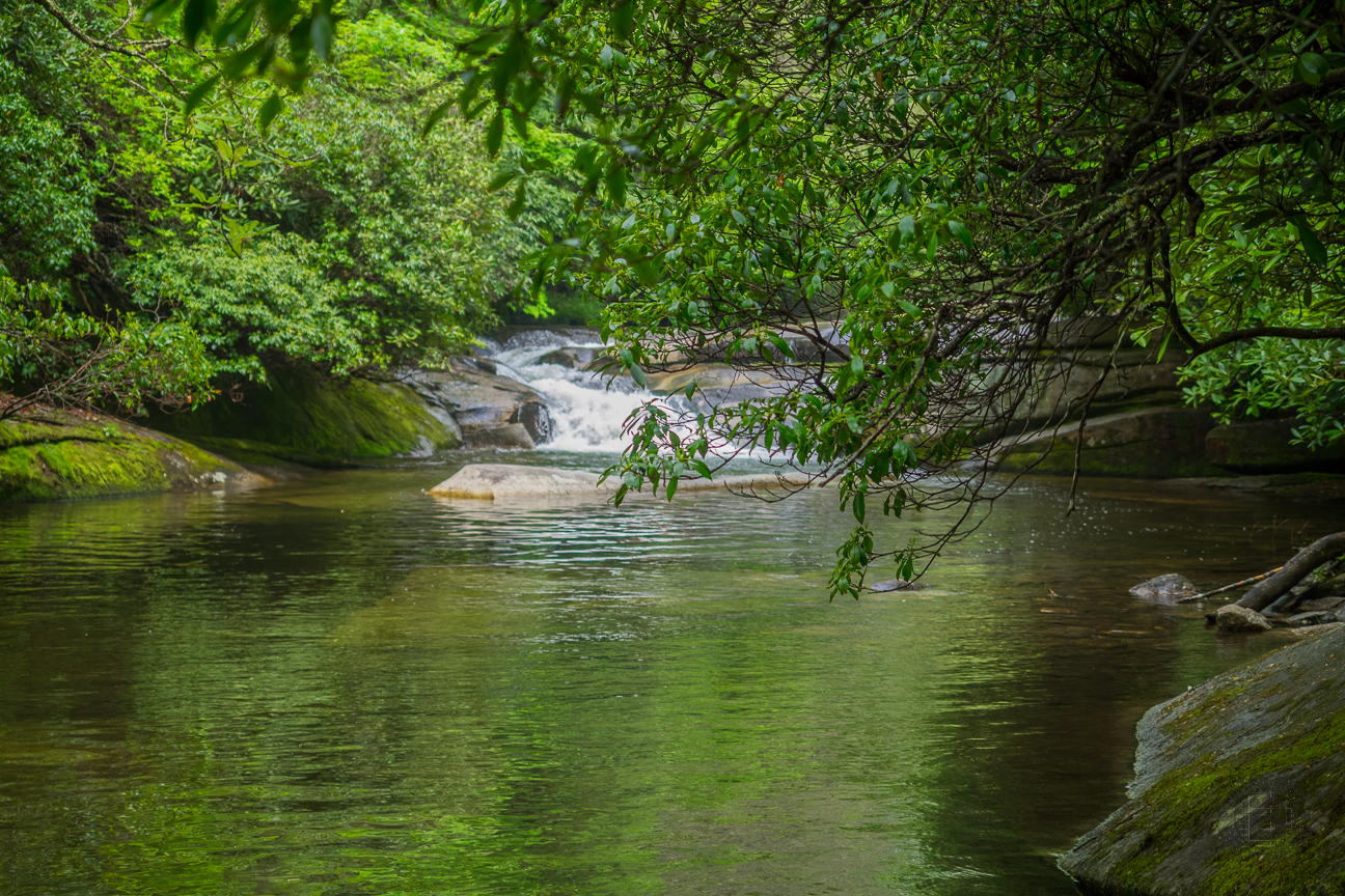 Meanderthals davidson river trail pisgah national forest for Davidson river fishing report