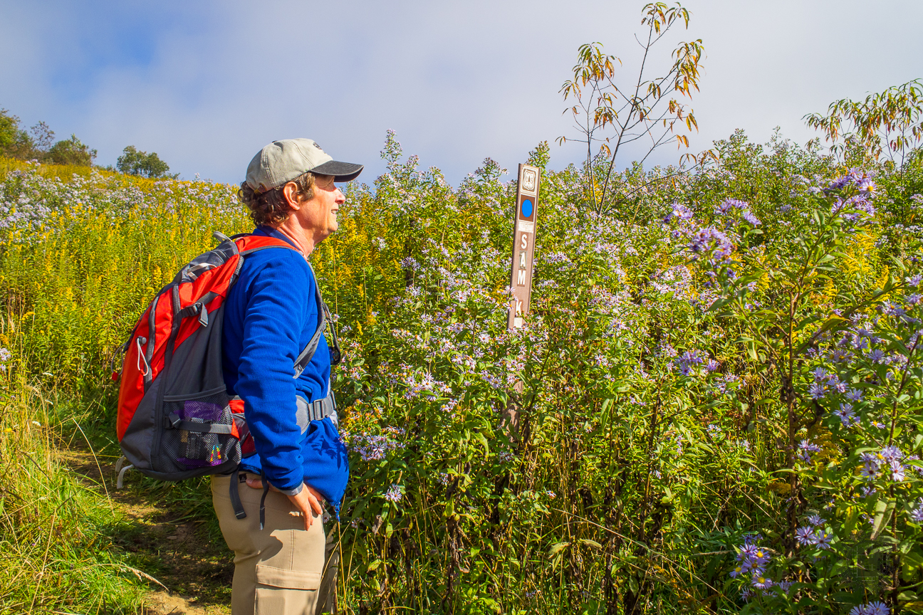 Hiking Amid the Autumn Wildflowers at Sam Knob in Pisgah National Forest