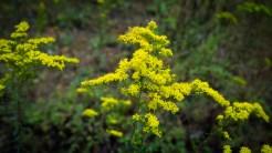 Favorite September flower