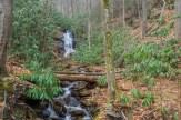 Log Hollow Branch