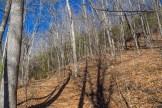Wall of mountain laurel