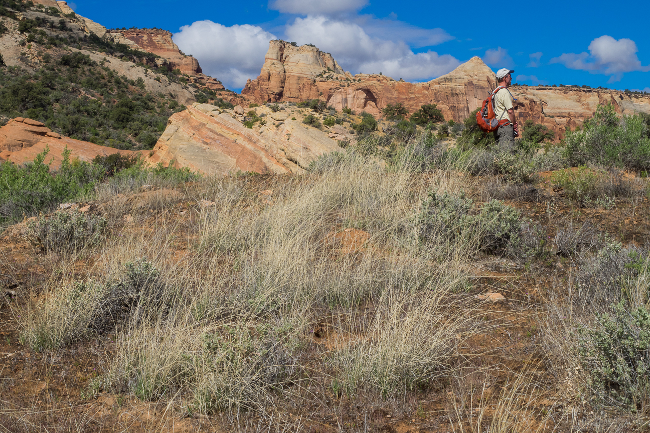 Here, along the Wedding Canyon Trail, my brother Dave surveys the town of Fruita in the Colorado River valley below. Directly behind him is The Saddlehorn, the first of the sandstone landmarks you will see along the cliffs that overlook the canyon.
