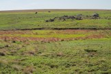 Prairie dogs and bison