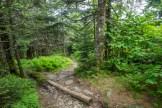 Appalachian Trail on Mt. Buckley