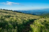 Wispy grass on Round Bald