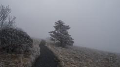 Fog and rime