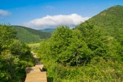 Sam Knob Trail boardwalk
