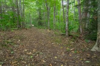 Cataloochee Divide Trail
