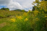 Goldenrod and Purchase Knob