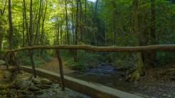 Footlog over Rough Fork