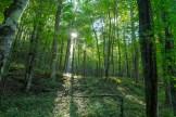 Sun illuminates the forest