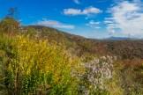 Black Balsam & Mt. Pisgah