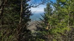Sylva through the spruce
