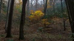 Still a few colorful trees