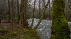 Douglas Fork looking downstream