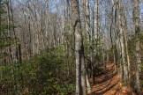 Trail amidst dense saplings