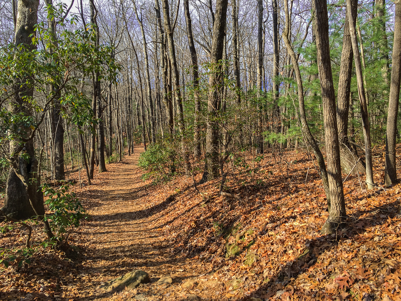 The Raven Cliff Falls Trail is wonderfully maintained and easy to navigate. Long stretches of level, root-free track like this one make hiking a cinch for any ability level.