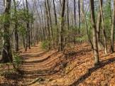 Wide, gentle pathway