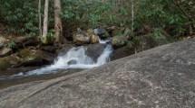 Cox Camp Creek