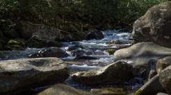 Porters Creek 4